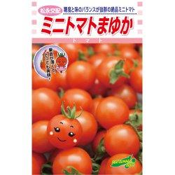 画像1: 松永交配 ミニトマト まゆか