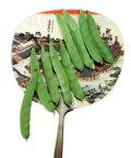 つるありカルナ菜豆