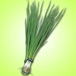 画像1: 松永育成 小ねぎ 緑絲
