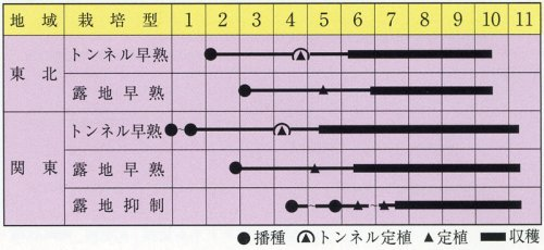 他の写真1: 松島交配 ちび丸ナス