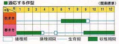 他の写真1: 柳川理想ゴボウ