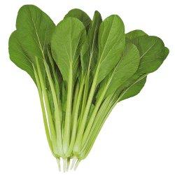 画像1: トーホク交配 まさみ小松菜