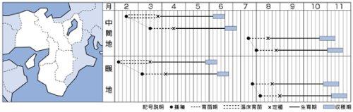他の写真1: タキイ交配 彩峰