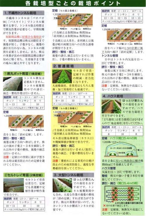 他の写真3: 松島交配 ほっとけ栗たん