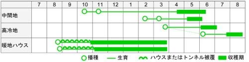他の写真1: 松永育成 大莢スナップ豌豆 豊姫