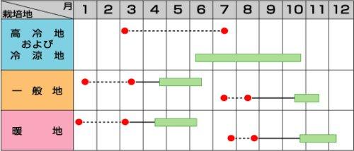 他の写真1: サカタ交配 ピクセル