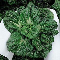 画像1: 三池高菜