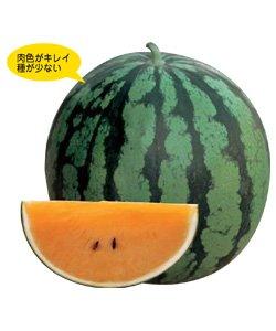 画像1: サマーオレンジミドル