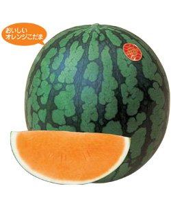 画像1: サマーオレンジベビー