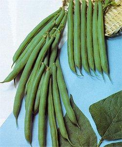 画像1: つるありロングラン菜豆